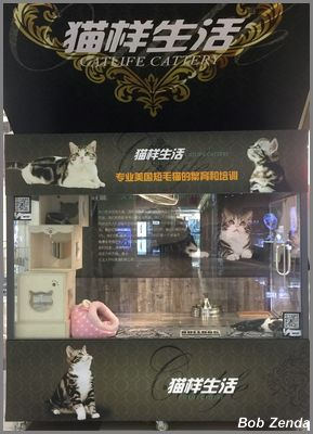 Cat Life permanent display in Mall