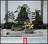 Bonsai Winner
