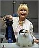 Bellamys Desiderata of Cinema